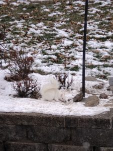 Fellows Rd. White Squirrel- Jody M
